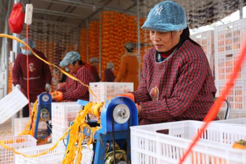 柿子红了,生活旺了!电商扶贫+分享村庄,为富平柿饼农户带来脱贫增收新思路