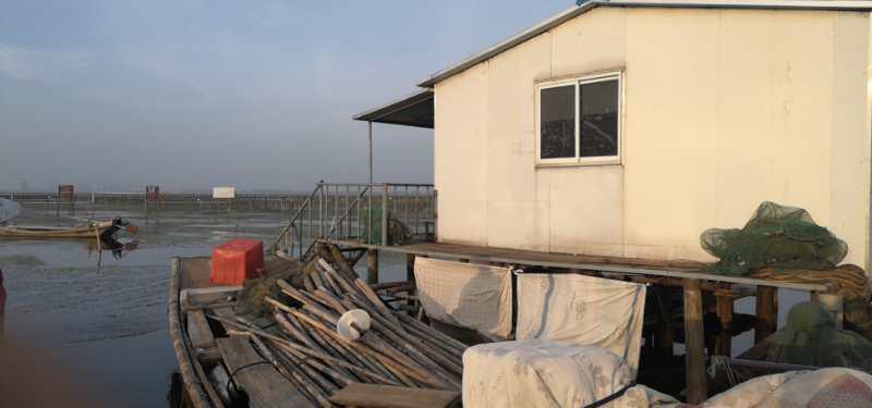 处暑探班阳澄湖大闸蟹,预计开捕日期将在9月下旬
